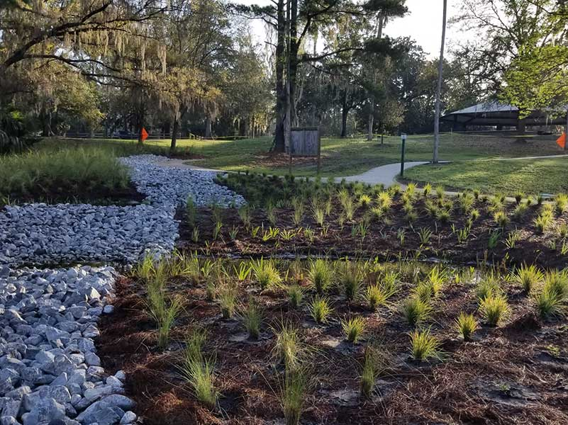 """""""Up-slope"""" view showing completed rock swale and infiltration basins with fresh plantings."""