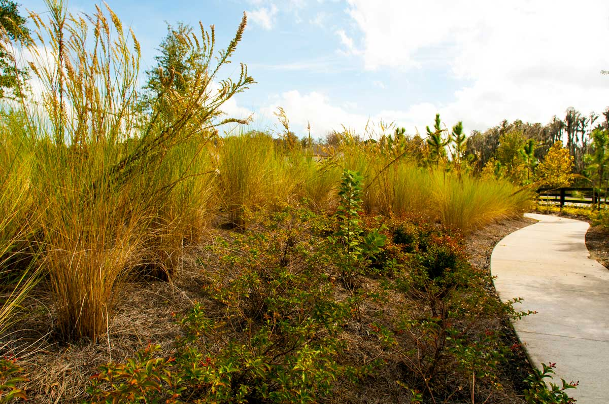 """Numerous native plant mixes were created to respond to the environmental factors of light, shade, and water. The """"grass mix"""" pictured here incorporates cordgrass and goldenrod. Another combination—the """"oak mix""""—includes firebush and beautyberry."""