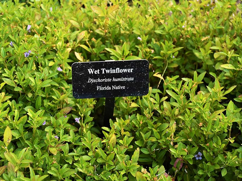 Many of the homeowners labeled their native Florida plants, simplifying their identification for attendees and visitors.